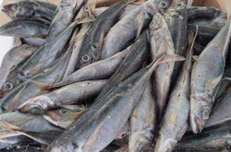 Baisse des produits surgelés en RDC : Pourquoi les importateurs boudent encore ?